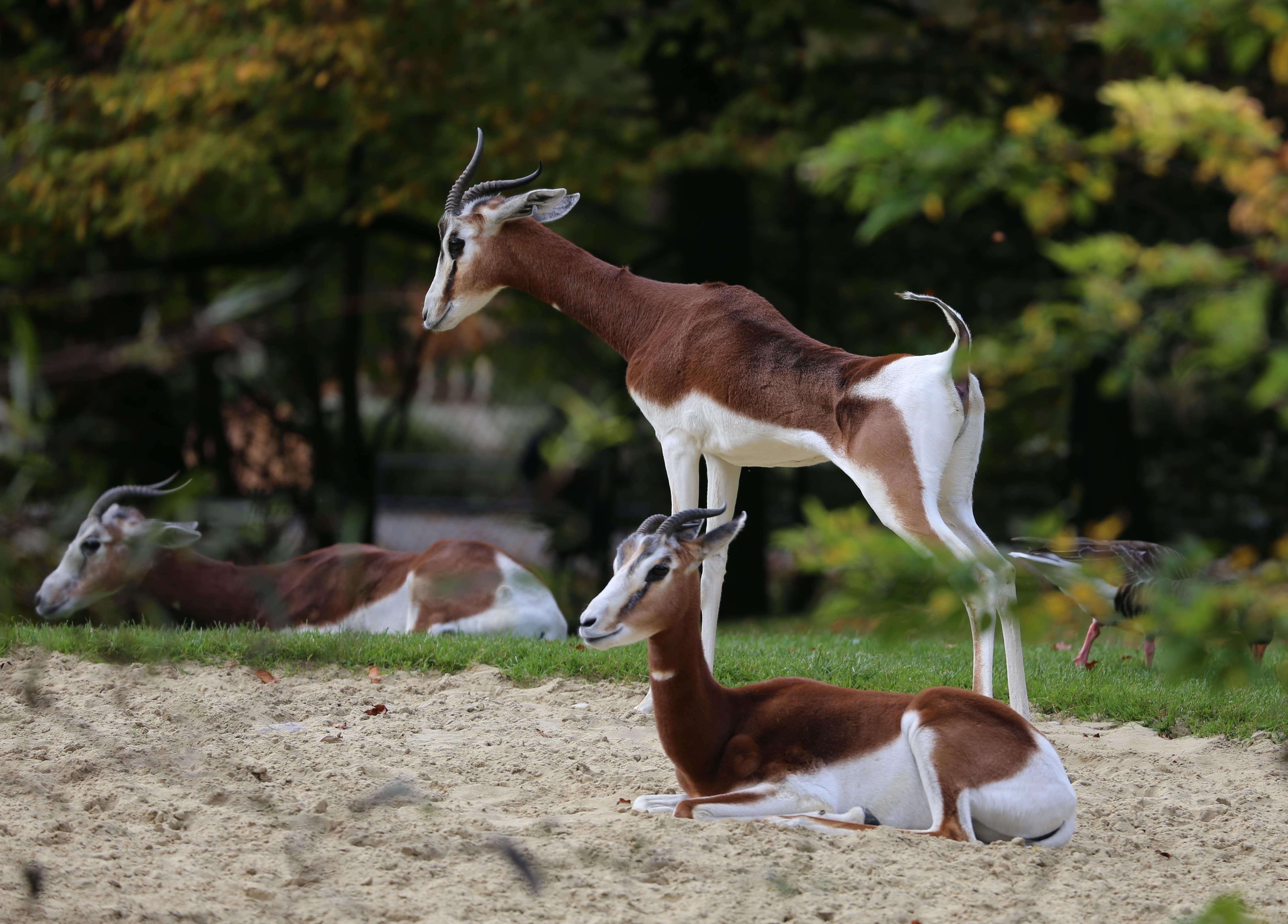 Parc Animalier Souss Masssa 1/2 Jour